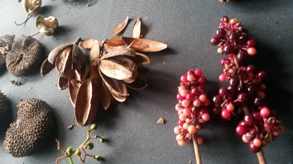 El intercambio de semillas y de información sobre árboles fue uno de los ejes centrales de la actividad. (Foto: Daniela Muñoz)