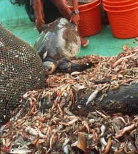 La pesca de arrastre recoge en las redes cualquier organismo vivo que encuentre en su barrido